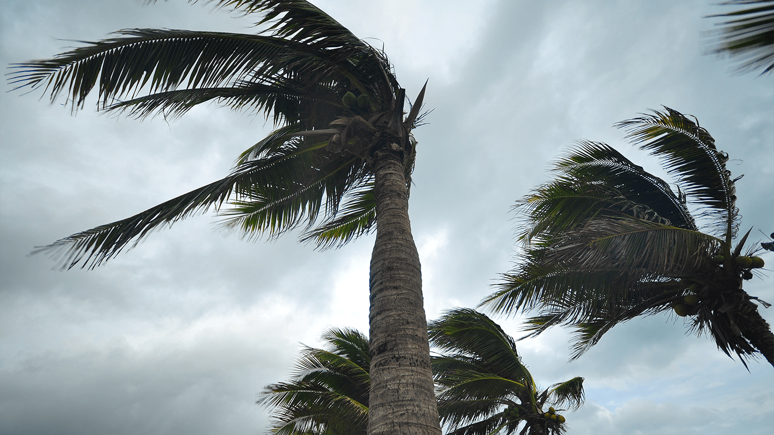 Weathering the Storm. Hurricane Preparedness Tips