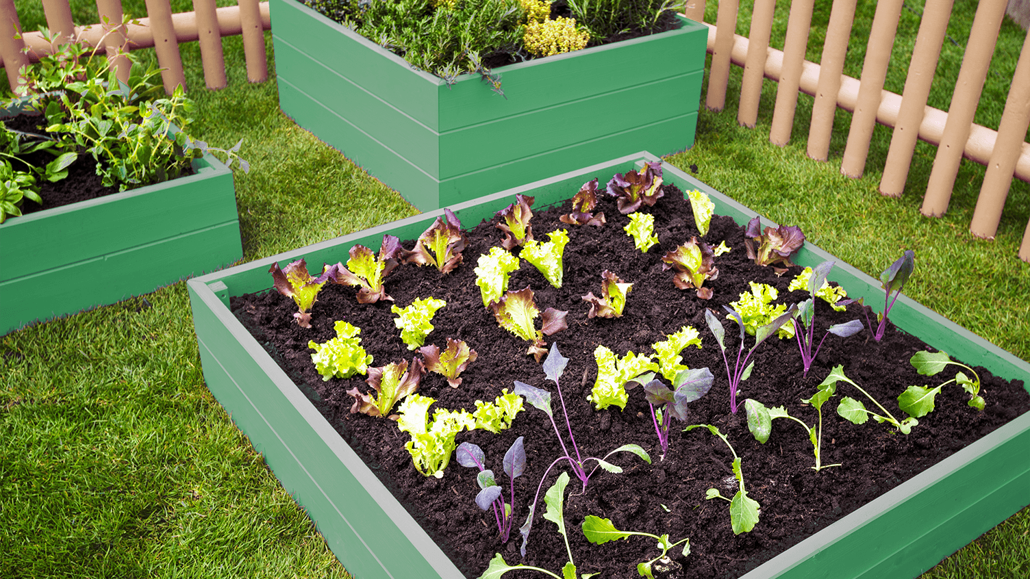 Raised Bed Gardening: Boxes of Veggies!