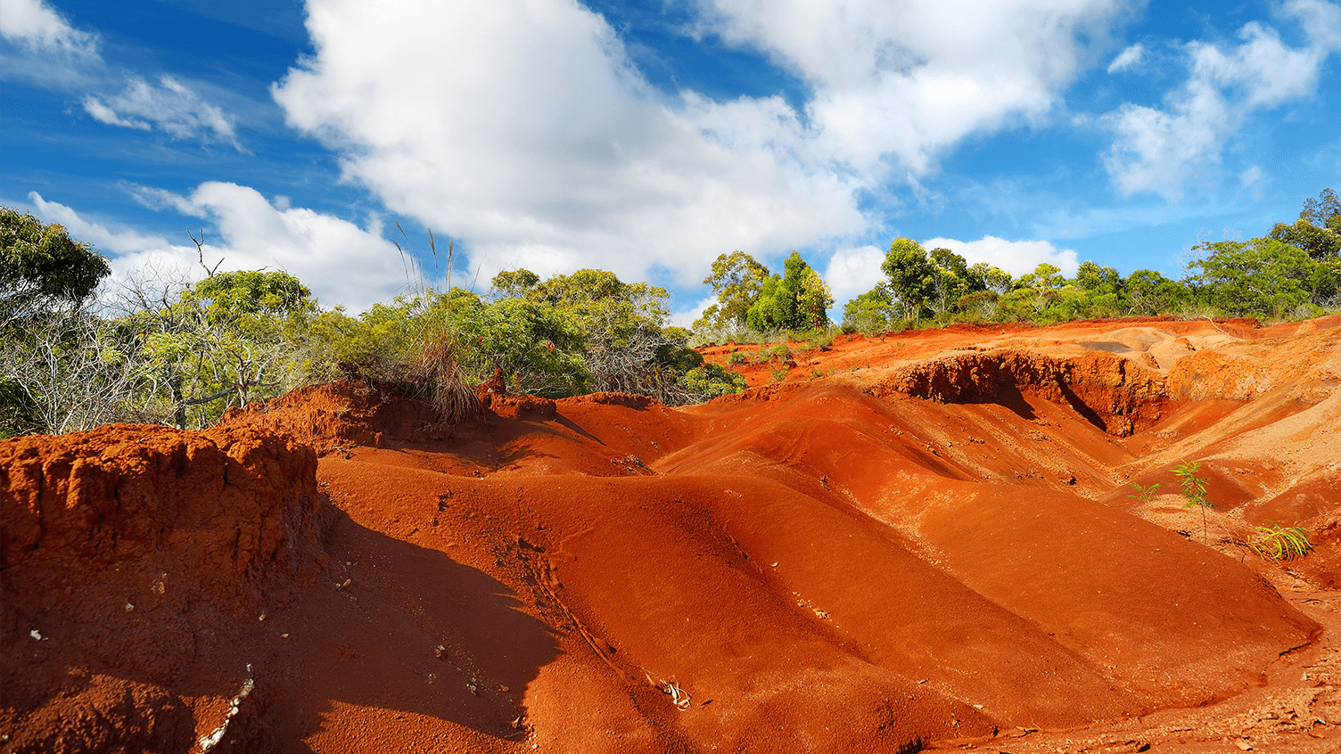 Hawaiian Red Dirt