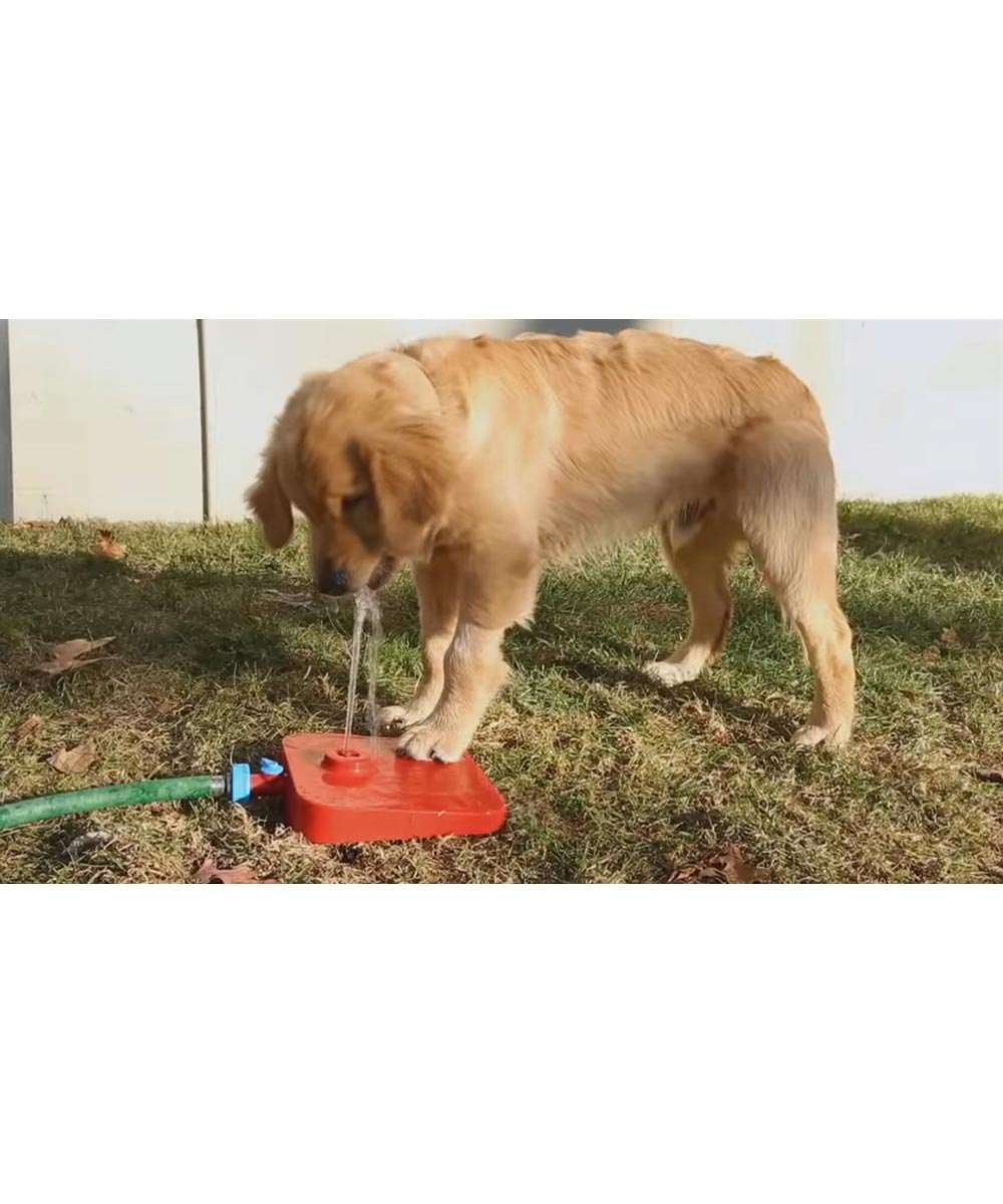 Pawcet Pedal Pressure Activated Pet Water Fountain