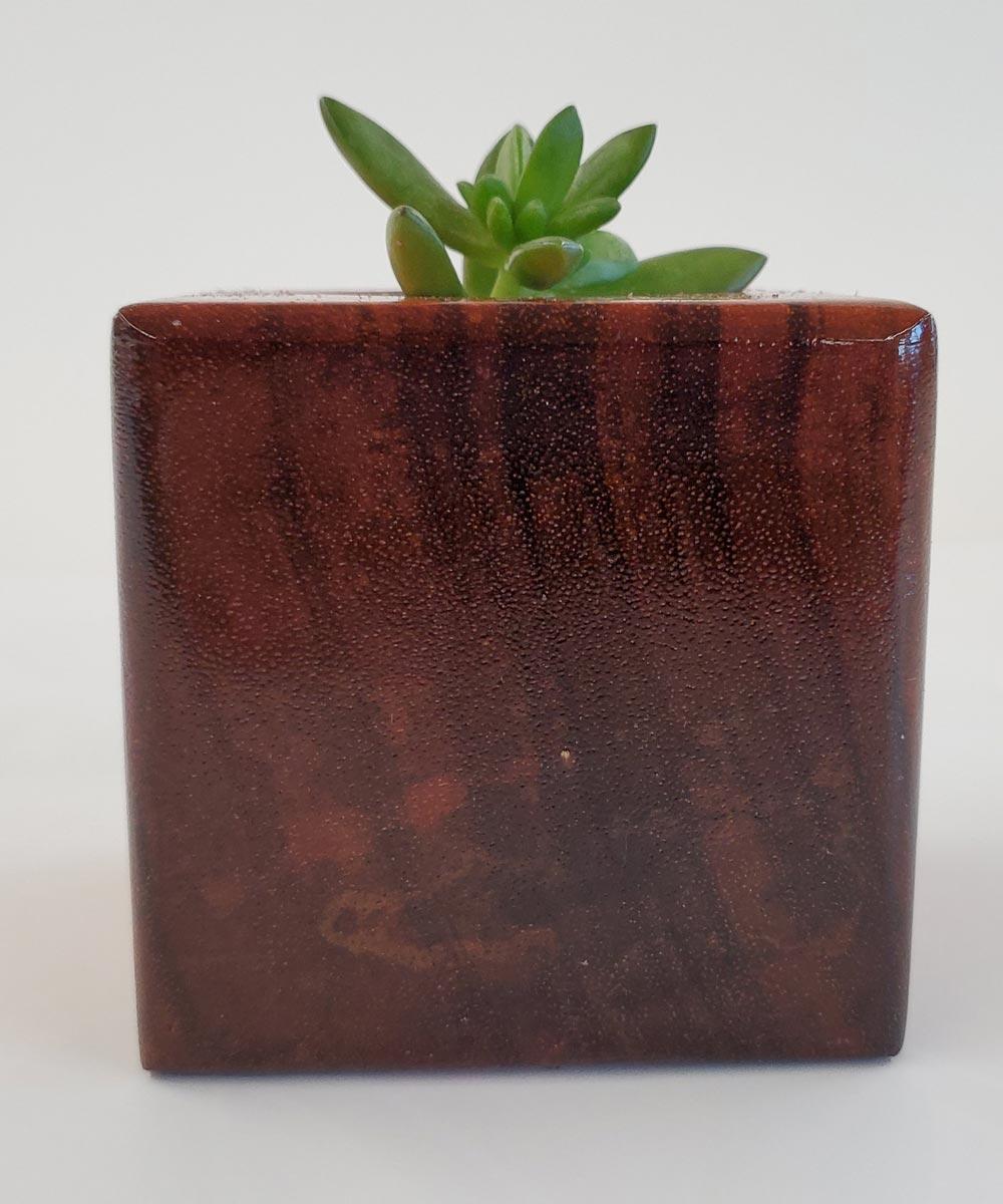 Momo Terrascapes Koa Wood Block Succulent Planter