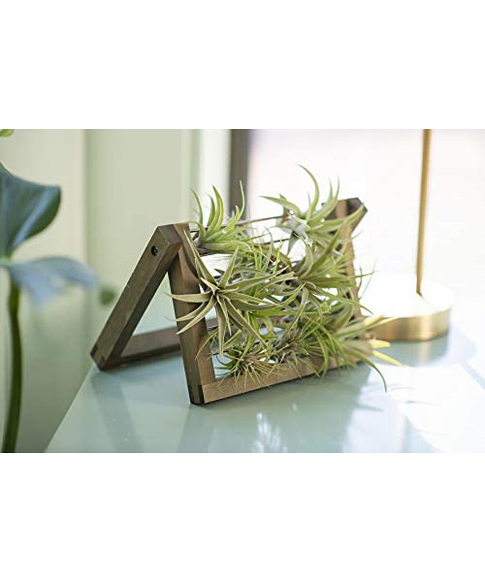 Syndicate 6 in. Air Plant Ladder, Natural Wood