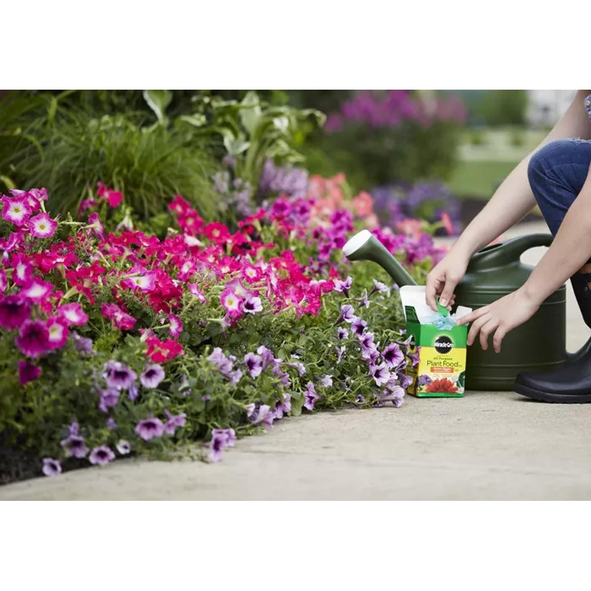 Miracle-Gro 4 lb. Water Soluble All Purpose Plant Food, 24-8-16