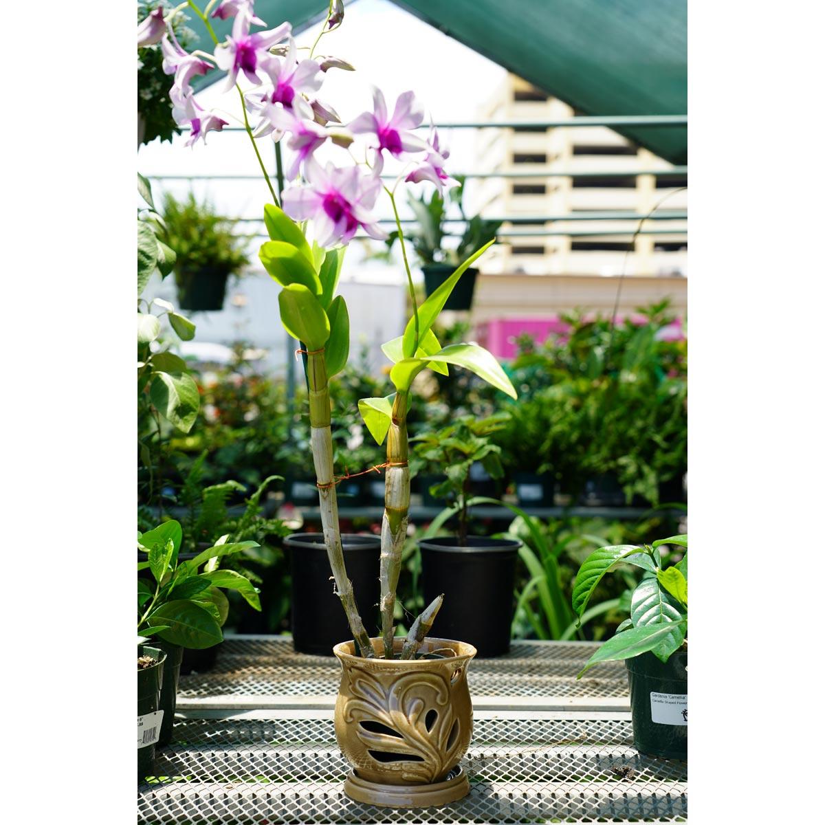 Southern Patio 5 in. Hilo Ceramic Orchid Pot
