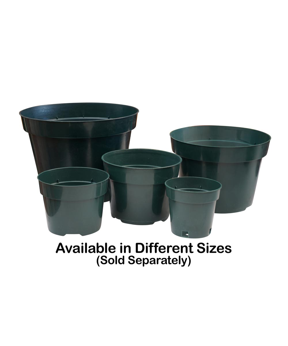 10 in. Plastic Planting Pot for Azaleas
