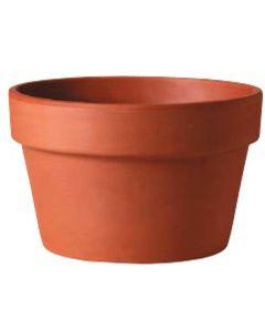 Pot Clay Fern 8 in.